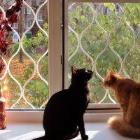Кошки смотрят в окошко. :: Ольга Кривых