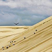 Большая дюна :: Владимир Самсонов