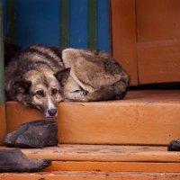 собачий холод :: Марат Валеев