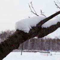 зимняя :: Наталья Хохлова