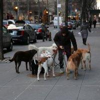 прогулка по Нью-Йорку :: Marina Chersheva