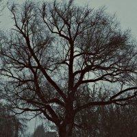Старое дерево... :: Надежда Дорохова