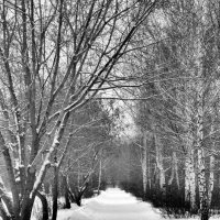 зима) :: Zhanna Guseva