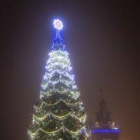 Елка в тумане :: Виталий Федоров