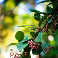 Осень в Алуште :: Ivan teamen