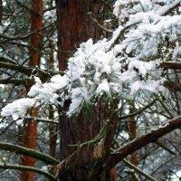 снег :: юрий иванов