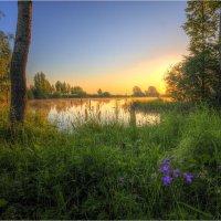 Лесное озеро :: Nikita Volkov