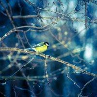 Птичка-синичка :: Ангелина Хасанова