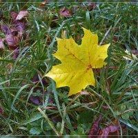 Желтый лист осенний :: Андрей Дворников