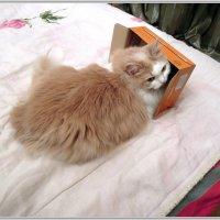 Алиса и коробка. :: Владимир Попов