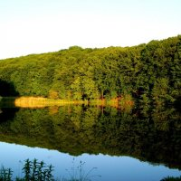 Летний сон заброшенного пруда. :: Анна Шелепова