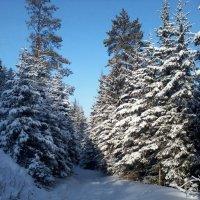 Зима в лесу :: sayany0567@bk.ru