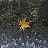 осень :: Elena Panova