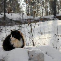 зимний кот :: Ир Ре