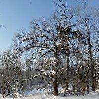 После снегопада :: Юрий Цыплятников