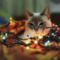 И у кошки новый год :: Антон Шелудков