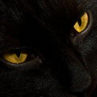 Эти глаза напротив :: Сергей Францев