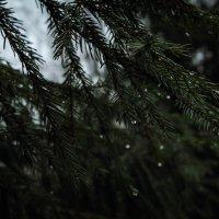 В полумраке леса... :: Любовь Анищенко