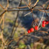 Последние плоды. :: Evan Andrukhov