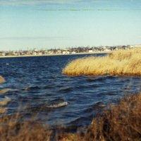Вода :: Сурикат Сусликов
