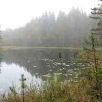 Туман на озере. :: Юля Елисеева