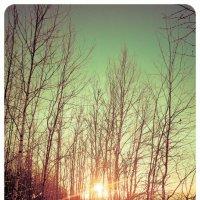 Краски леса :: Дмитрий Тагиев
