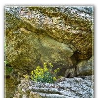 каменные цветы :: Анатолий Островский