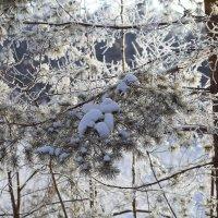 Зима 3 :: Владимир