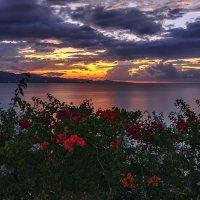 Красные цветы :: Lucky Photographer