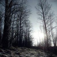 ПЕРВЫЕ МОРОЗЫ . . . :: Василий Гаинский