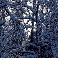 Дыхание зимы :: Андрей Примаченко