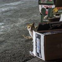 Вы меня звали?-из серии Кошки очарование мое! :: Shmual Hava Retro