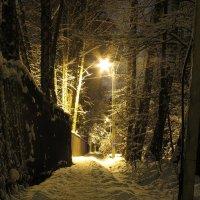 Зима.Забор.Фонарь. :: Алексей Сараев