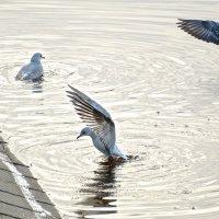 Водные процедуры в середине января в Риге :: MVMarina