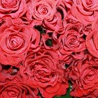 Розы :: Inna Borduzhe