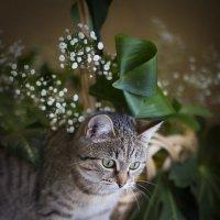 Аромат цветов так манит... :: Павел Сухоребриков