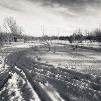 морозное утро :: Андрей Белокопытов