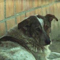 Пёс :: Сурикат Сусликов