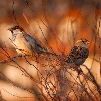 Птички :: Анастасия Демида