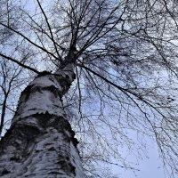 Небо в веточках. :: Nonna