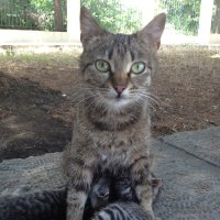 Кошка мама :: Любовь Пашина
