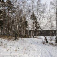 Такой вот малоснежный январь. :: Сергей Адигамов