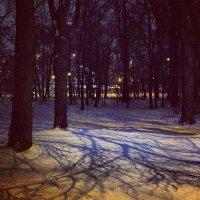 А дубы колдуны.... :: Юлия Годовникова
