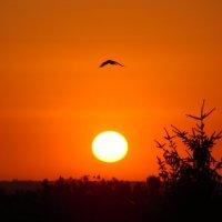 Закат с моей террасы :: Юлия Козловская