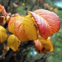 осенние листья :: юрий иванов