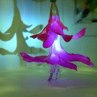 танец на окне :: Ольга