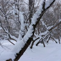 Снежные гусеницы :: Сергей Беляев