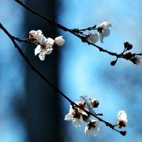 Весна :: Victoria Veber