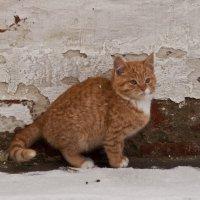 Монастырский кот :: Дмитрий Смирнов
