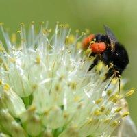 Пыльца :: Olga Veisman
